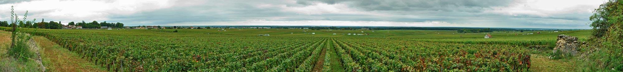 Gevrey-Chambertin harvest 2010